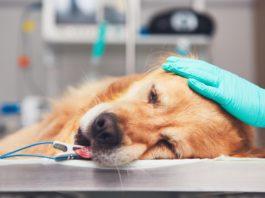 Cane con diarrea o ibd: il microbiota ha un ruolo