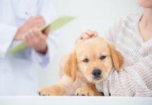 I probiotici ripristinano l'eubiosi del microbiota intestinale nella diarrea emorragica acuta nei cani