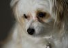 Tumore al colon retto nel cane: il ruolo del microbiota intestinale