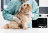 Cani: individuata correlazione tra disbiosi intestinale e metabolismo degli acidi biliari