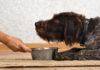 Dieta naturale vs commerciale: quale impatto sul microbiota dei cani