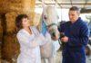 Effetti dell'omeprazolo sul microbiota intestinale dei cavalli