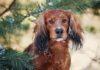 Cani: il probiotico Lactobacillus reuteri riduce la proliferazione intestinale dei patogeni