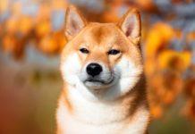 Microbiota intestinale del cane: studio italiano rivela tassonomia e caratteristiche metaboliche