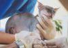 Scoperta correlazione tra diabete e microbiota intestinale nei gatti