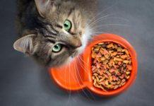 L'aggiunta di fibre vegetali alla dieta migliora il microbioma del gatto domestico