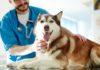 Beta-lattamasi orali in difesa del microbioma intestinale dei cani