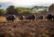 Asse intestino-cervello negli animali da fattoria: review sul benessere psicofisico di polli & Co.
