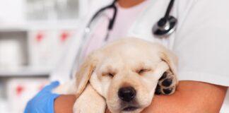 Un nuovo modello in vitro per studiare il microbiota intestinale dei cani