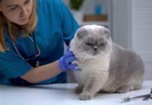 Alla scoperta del viroma felino: una review sui nuovi virus intestinali nei gatti