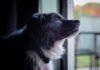Studio USA conferma: prebiotici e fibre hanno effetti positivi sul microbiota dei cani